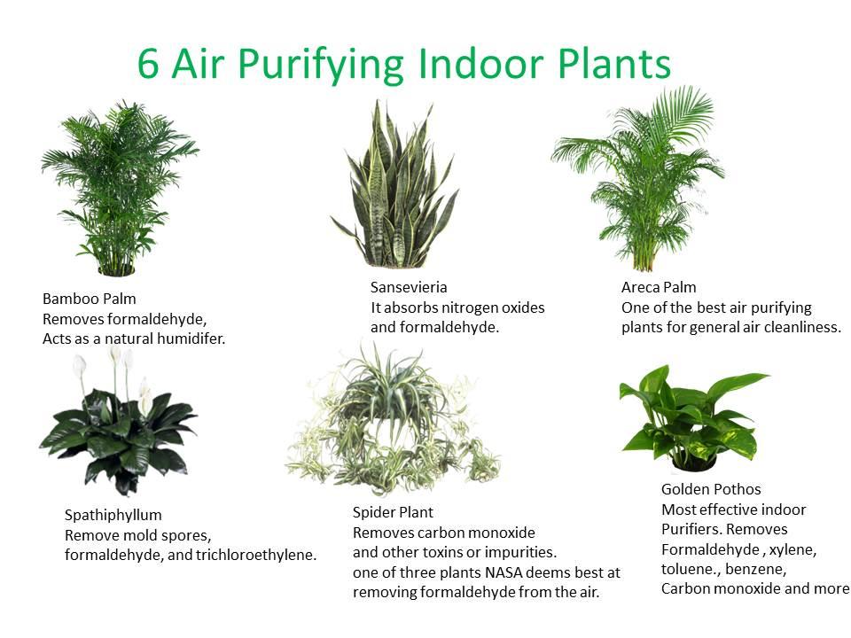 6 Good Indoor Plants Market Mad House